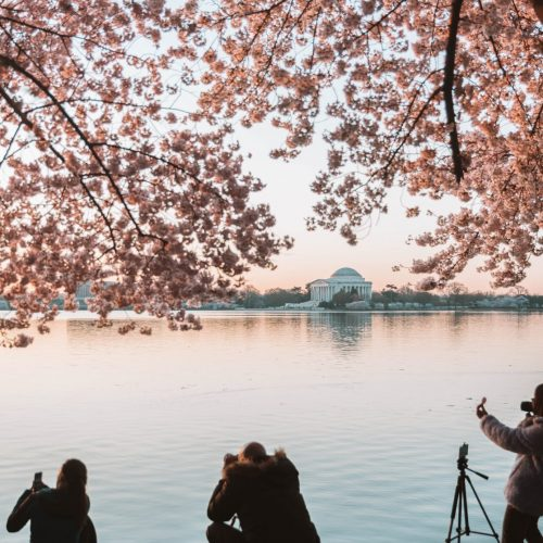 igdc-cherry-blossom-peak-bloom-instameet